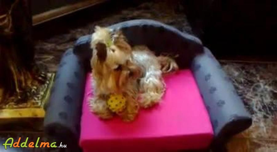 Kutya ágy,kinyitható