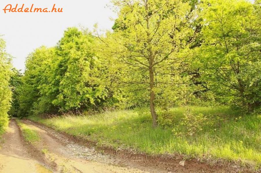 Erdő eladó (19.792 m2)