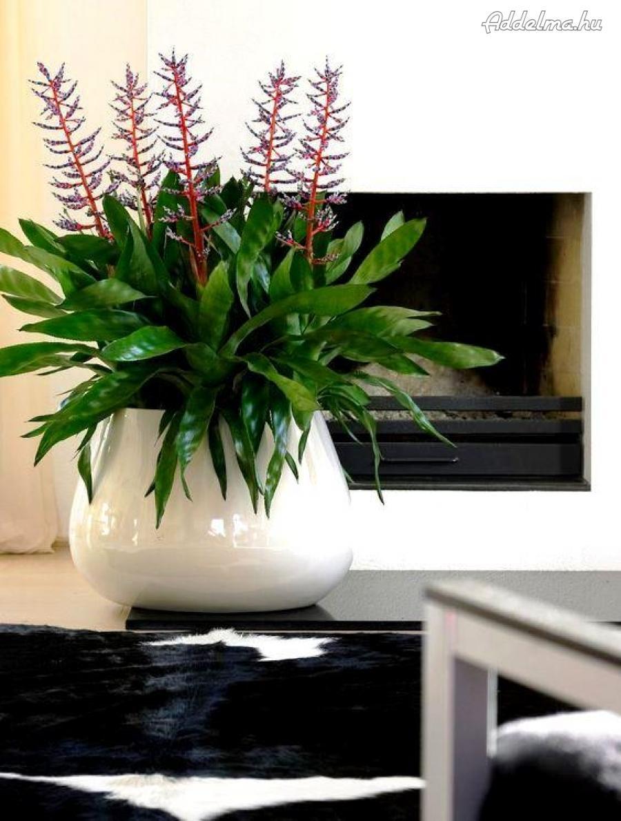 Irodai növénydekoráció, virág dekoráció, növényápolás