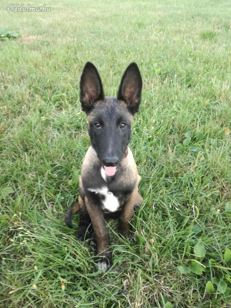 Kutyamegőrzés és felügyelete
