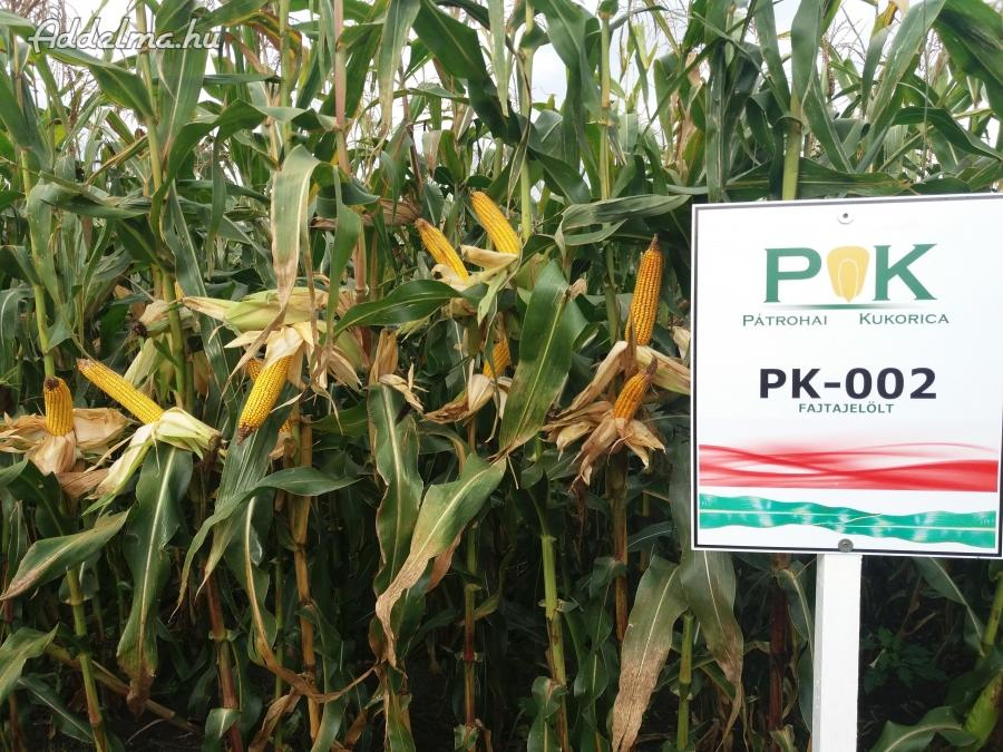 PK-002 Organikus Kukorica előrendelési AKCIÓ! - Rekordereknek!